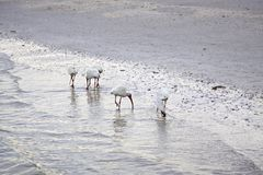 White birds on a beach stock images