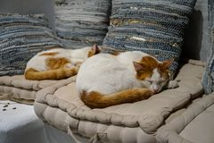 Beautiful white and brown color cats sleeping comfortably on white fabric comfy cushion with pillows background on sleepy day Stock Photography