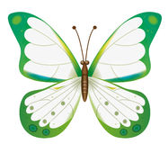 A beautiful white butterfly Stock Image
