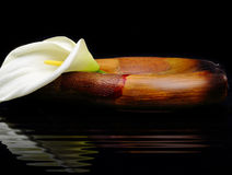 Beautiful white Calla lily. Reflected in water Stock Photography
