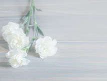Beautiful white carnation flowers  on wooden background Royalty Free Stock Photo