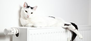 Beautiful white cat relaxing on the radiator closeup. royalty free stock photography