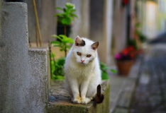Beautiful white cat Stock Photo