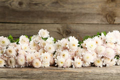 Beautiful white chrysantheBeautiful white chrysanthemums on grey wooden background.mums on grey wooden background Stock Images