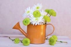 Beautiful white  chrysanthemums flowers in orange water can Stock Photo