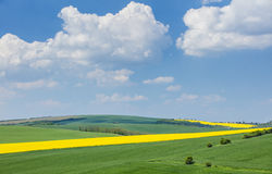 Beautiful white clouds above spring colored fields Royalty Free Stock Image