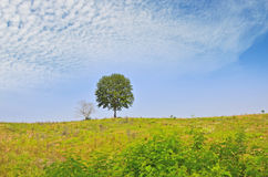 Beautiful white clouds over green tree and hill Stock Images