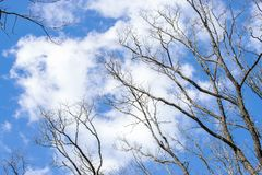 Beautiful white clouds and spring trees against the blue sky.  stock photos
