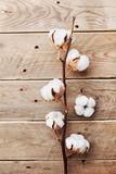 Beautiful white cotton flowers on rustic wooden table top view, flat lay. Royalty Free Stock Images