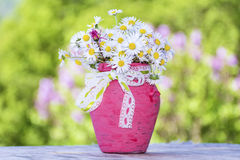 Beautiful white daisies flowers in pink vase with ribbon Royalty Free Stock Images