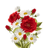 Beautiful white daisies and red roses. On white background. Floral vector background Stock Images