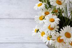 Beautiful white daisy Stock Image