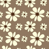 Beautiful white daisy flowers on brown background seamless pattern background Royalty Free Stock Photography