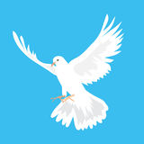 Beautiful white dove flying way up in a blue sky Royalty Free Stock Photos