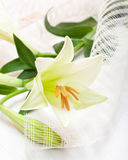 Beautiful white Easter lily flower bouquet Royalty Free Stock Photo