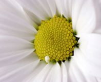 Beautiful white flower Stock Photo