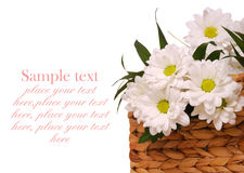 Beautiful white flower Stock Images