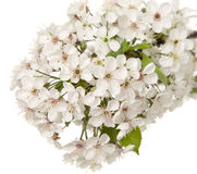 Beautiful white flower with amazing blossoms Stock Images