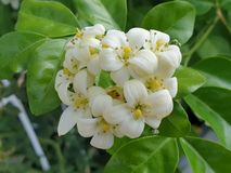 Beautiful white flower. Garden park stock image