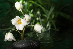 Beautiful white flower among the black stones  in the rain Royalty Free Stock Photography