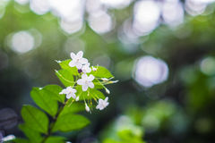Beautiful white flower. Branch of beautiful white flower royalty free stock image