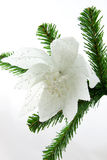 Beautiful white flower on christmas tree Stock Images