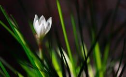 Beautiful white flower. Stock Image