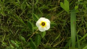 A beautiful white flower. Beautiful white  flower garden garden-life royalty free stock images