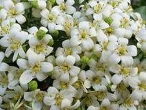 Beautiful white flower. Garden park royalty free stock photos