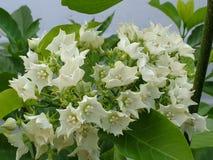 Beautiful white flower. Garden park stock photos