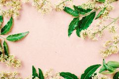 Beautiful white flower and green leaves, spring background. Top view Royalty Free Stock Photos