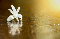 Beautiful white flower Stock Photo