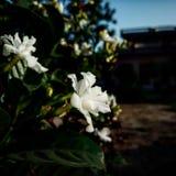 Beautiful white flower royalty free stock photos