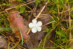 Beautiful white flower petals fallen on leaves in forest after the rain. Decorative look. Shallow depth of field closeup macro photo Stock Images