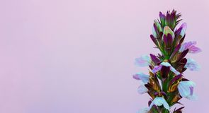 Beautiful white flower on the pink wall .  background royalty free stock images