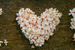 Beautiful White flowers. (tung tree flower)Heart shape royalty free stock photography