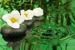 Beautiful white flowers among the black stones  in the rain Royalty Free Stock Image