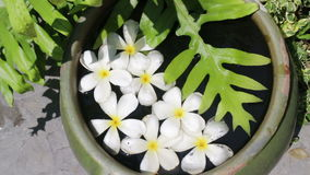 Beautiful White Flowers Group Decorated On Water Bowl. Stock video stock video