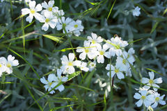 Beautiful white flowers, grow among grass and foliage Stock Photos