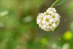 Beautiful white flowers in nature. macro. In the park in nature stock photography