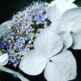 Beautiful white flowers with pastel colours. Stunning pastel colours Royalty Free Stock Image