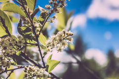 Beautiful white flowers Royalty Free Stock Photography