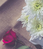 Beautiful white flowers with sun light on jute background Royalty Free Stock Photo