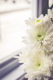 Beautiful white flowers with sun light on vintage tone Stock Photography