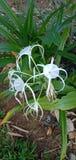 Beautiful white flowers stock photos