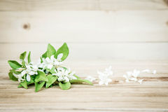 Beautiful white flowers on a wooden background Royalty Free Stock Photo