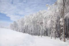 Beautiful white forest during winter time Royalty Free Stock Photo