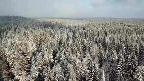 Beautiful white hill with winter trees. Snowy winter forest with white beautiful trees in the deep faraway stock video