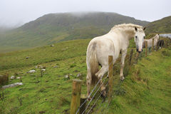 Beautiful white horse on background of mountains Royalty Free Stock Photography