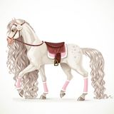 Beautiful white horse with a long mane and saddle blanket isolat Royalty Free Stock Image